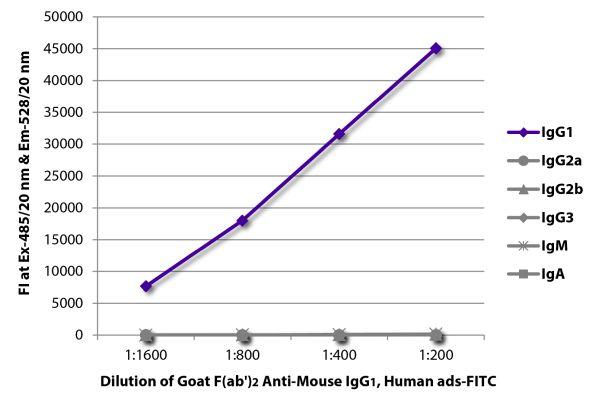 Abbildung: Ziege F(ab')2 anti-Maus IgG1 (Fc)-FITC, MinX Hu
