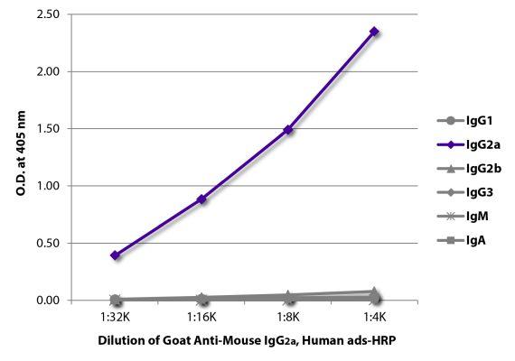 Abbildung: Ziege IgG anti-Maus IgG2a (Fc)-HRPO, MinX Hu