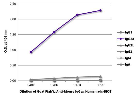 Abbildung: Ziege F(ab')2 anti-Maus IgG2a (Fc)-Biotin, MinX Hu