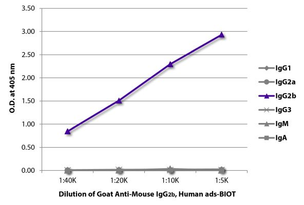 Abbildung: Ziege IgG anti-Maus IgG2b (Fc)-Biotin, MinX Hu