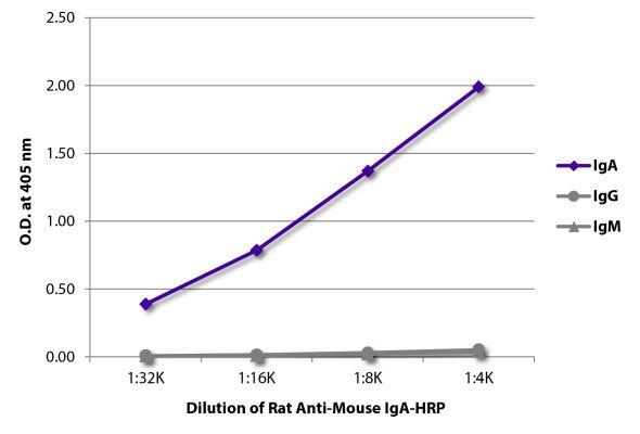 Abbildung: Ratte IgG anti-Maus IgA-HRPO, MinX keine