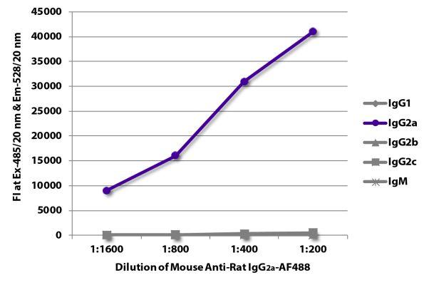 Abbildung: Maus IgG anti-Ratte IgG2a (Fc)-Alexa Fluor 488, MinX keine