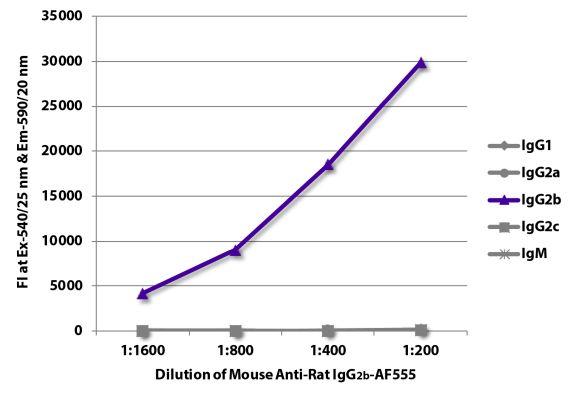 Abbildung: Maus IgG anti-Ratte IgG2b (Fc)-Alexa Fluor 555, MinX keine