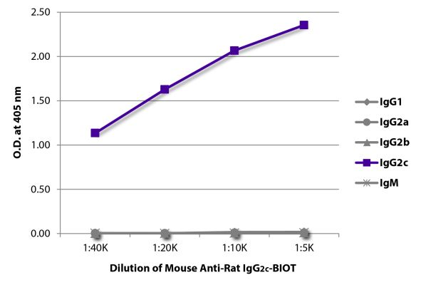 Abbildung: Maus IgG anti-Ratte IgG2c (Fc)-Biotin, MinX keine