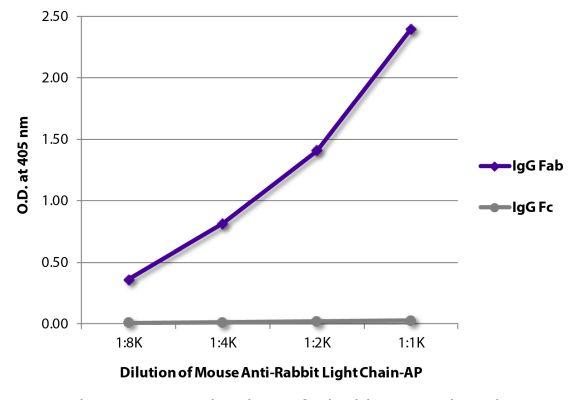Abbildung: Maus IgG anti-Kaninchen Kappa/Lambda-Alk. Phos., MinX keine