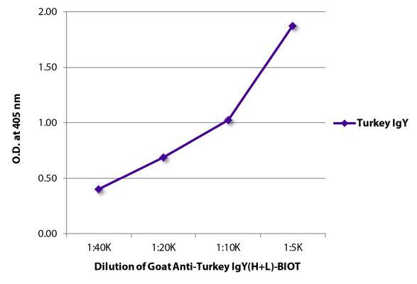 Abbildung: Ziege IgG anti-Truthahn IgY (H+L)-Biotin, MinX keine