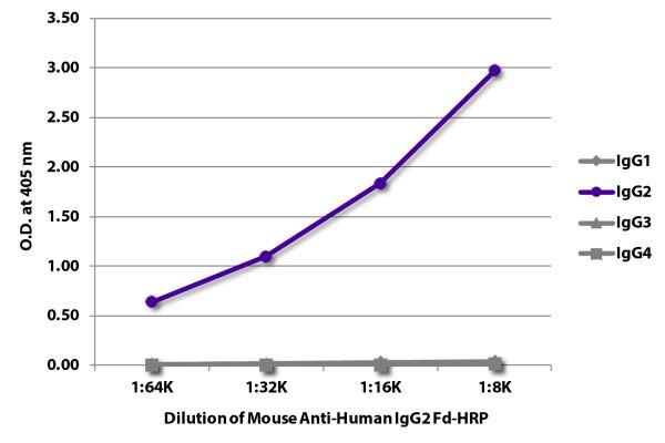 Abbildung: Maus IgG anti-Human IgG2 (Fd)-HRPO, MinX keine