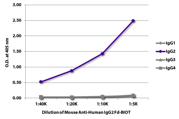 Abbildung: Maus IgG anti-Human IgG2 (Fd)-Biotin, MinX keine