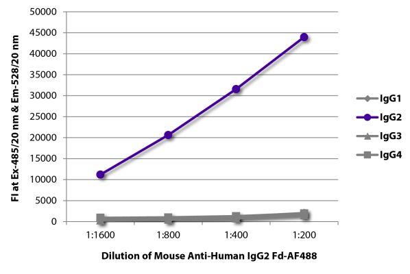 Abbildung: Maus IgG anti-Human IgG2 (Fd)-Alexa Fluor 488, MinX keine
