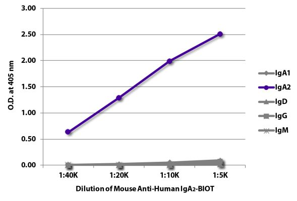 Abbildung: Maus IgG anti-Human IgA2-Biotin, MinX keine