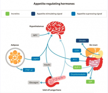 Anorexigenic and orexigenic hormones
