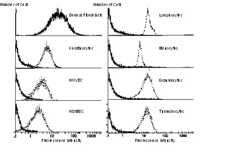 Flow Cytometry - Anti-CD90 / Thy1 antibody (DIA-100, DIA-120)
