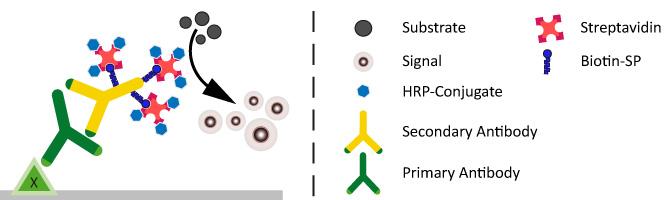 Enzym conjugated secondary antibodies - Biotin