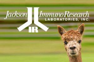 Anti Alpaka Antikörper für die Nanobody Detektion