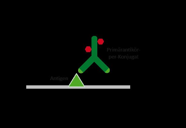 Direkter Nachweis von Antikörpern
